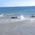 Unos peces inquietos en la playa