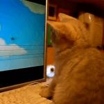 Vídeo de  animales que también caen en bromas