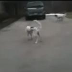 El perro más hiperactivo del mundo