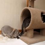 La exótica amistad entre un gato y un conejo