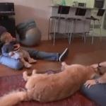 Niños, perros y gatos si pueden convivir
