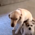 Reacciones de perros culpables