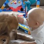 Un niño y un perro son amigos inseparables
