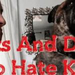 Los gatos y perros no quieren tus besos