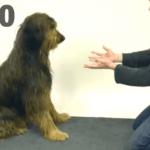 Magia con perros