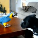 La comunicación entre animales