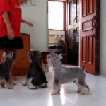 Tener un perro disciplinado
