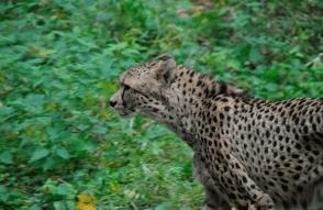 Los 10 animales más rápidos del mundo