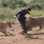 Un hombre jugando con leones al fútbol
