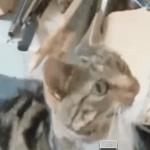 Formas divertidas de comunicarse de diferentes animales
