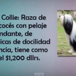 TOP 10 de las razas de perros más cara del mundo