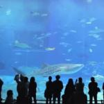 TOP 10 de los acuarios más grandes del mundo