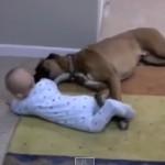 Amistad entre los bebes y los perros