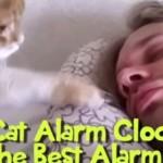 Los gatos son el mejor despertador