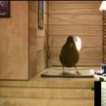 Un divertido pájaro y su pequeño hogar