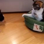 Perro recuperando su cama robada por un gato