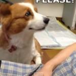 Perros vs gatos y la reacción con las personas