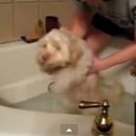 Reacción de los perros ante el baño