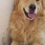 Top 10 de los perros más bonitos del mundo