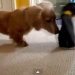 Vídeos graciosos de animales divertidos