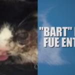 Gato sale de su tumba 5 días después de enterrado