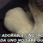 Gatita adopta perro a punto de morir