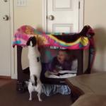Entretenido vídeo en el que bebé juega con perrita