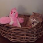 Gato no se impresiona con nuevo juguete que canta