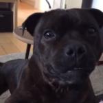 Perro haciendo ruidos únicos