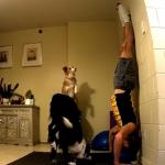 Perros hacen yoga con su dueño en casa