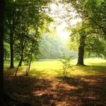 El maravilloso bosque lanudo del reino unido
