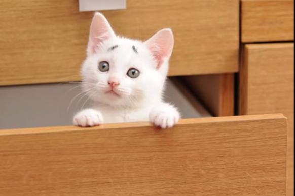 Gary el gato preocupado es la nueva sensación de la red