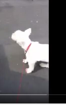 Perro sordo rockea en concierto del pueblo