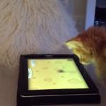 Gatico juega con una tablet persiguiendo un ratón